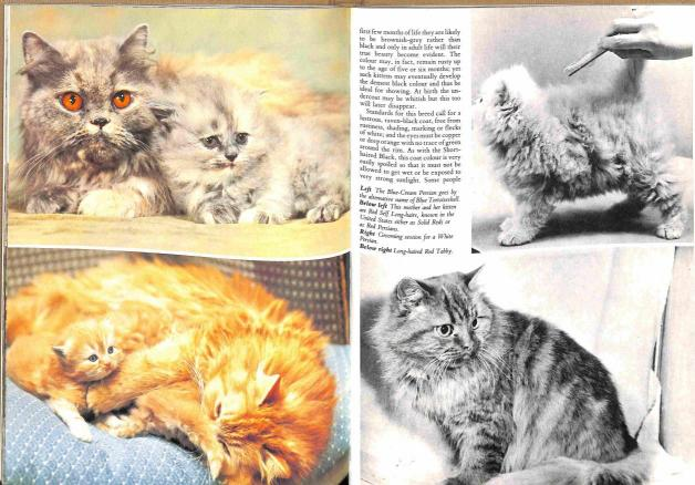 Gilbert John - Beautiful Cats & Kittens ilustr.1